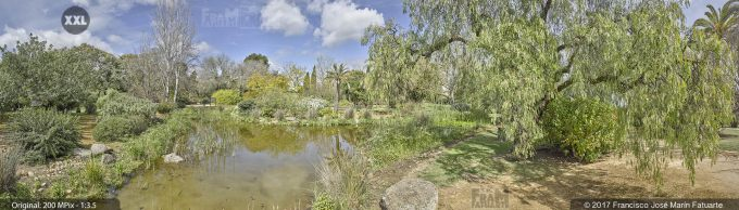 H5067405. El Arboreto del Carambolo. Sevilla. Spain