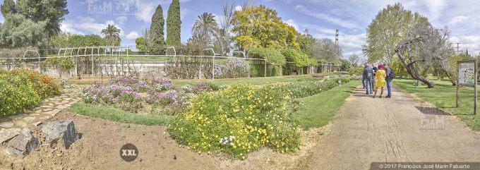 H50691F5. El Arboreto del Carambolo. Sevilla. Spain
