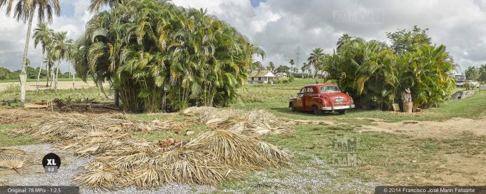 E1984202. Local palm tree handcrafting near Pinar del Río, Cuba