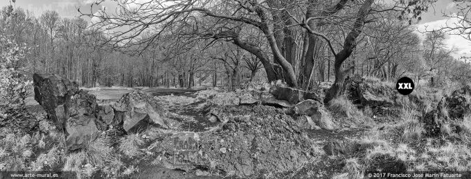 H5930493. Mount Etna Nature Park. Trees and lava stone. Sicily (Italy)