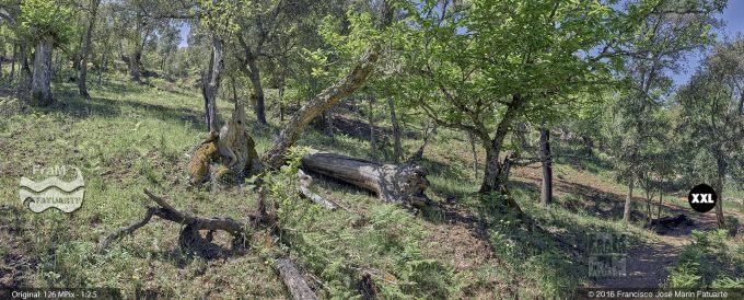 G3465003. Old trees around Valdelarco - Huelva (Spain)