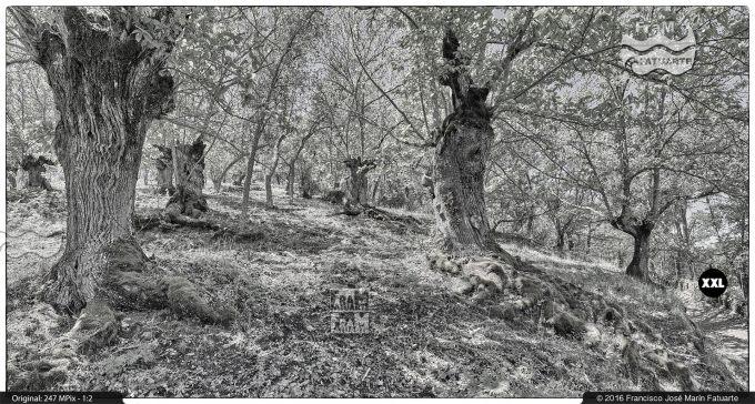 G3466004. Old trees around Valdelarco - Huelva (Spain)