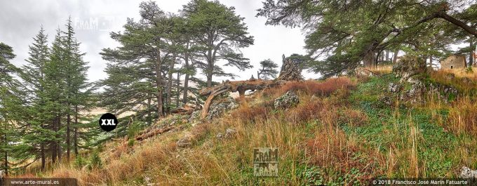 IF224704. Ouadi Qadisha and the Forest of the Cedars of God. Bcharreh, North Governorate, Lebanon