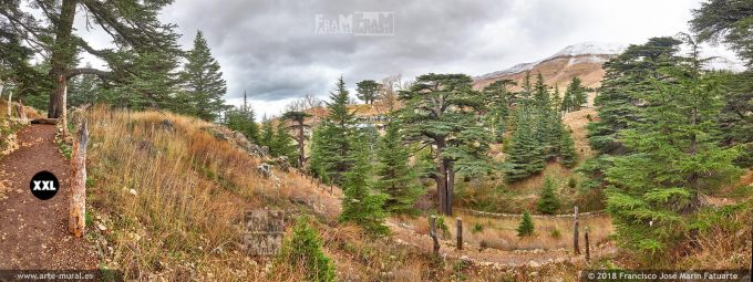 IF225906. Ouadi Qadisha and the Forest of the Cedars of God. Bcharreh, North Governorate, Lebanon